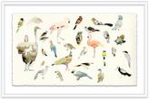 "One Kings Lane Mary H. Case - Bird Chart Art - 13""L X 20""W"