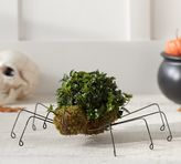 Pottery Barn Live Spider Topiary
