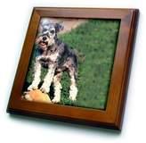3dRose LLC ft_259_1 Dogs Schnauzer - Schnauzer - Framed Tiles