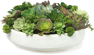Diane James Mixed Echeveria in White Clay Bowl
