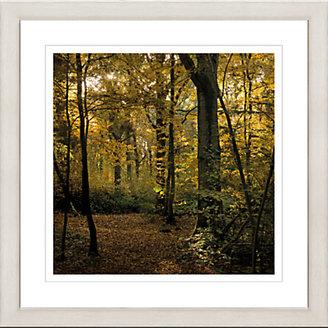 John Lewis David Purdie - Park Wood Autumn Framed Print, 65 x 65cm