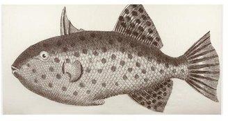 Thomas Paul Big Fish Gauze Scarf