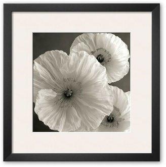 "Art.com Poppy Study IV"" Framed Art Print by Sondra Wampler"