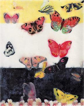 Hadley Hutton Butterfly Stripes