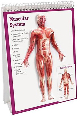 Learning Resources Human Body Flip Chart