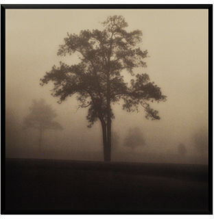 STUDY Metaverse Framed Art, Fog Tree I