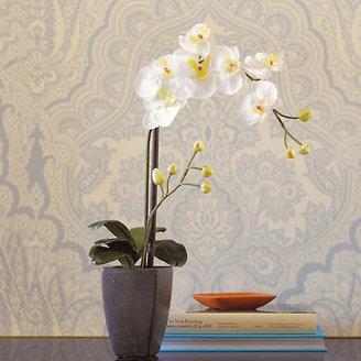 White Orchid Elegant