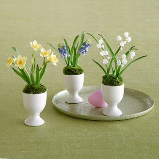Gump's Spring Bulbs In Egg Cups