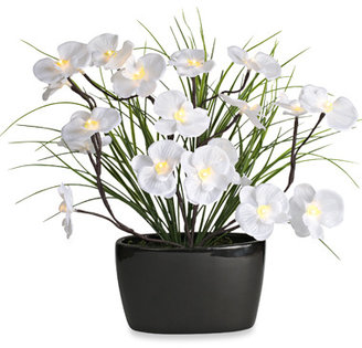 White Orchid 20-Inch Brown-Wrapped LED Lighted Branch Arrangement