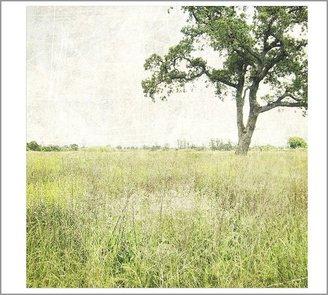 Pottery Barn Tree Framed Print by Lupen Grainne