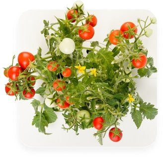 Williams-Sonoma Click and Grow Starter Kit, Tomato