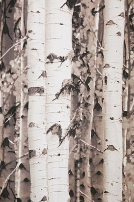 Urban Outfitters Birch Tree Shower Curtain - ShopStyle Home