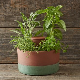 Williams-Sonoma Joey Roth Self-Watering Planter