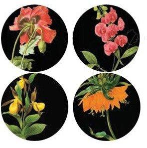 Thomas Paul Florilegium Dinner Plates Set of 4