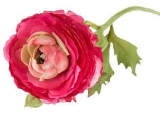 Grey Rose by Jane Packer Bright pink single stem flower