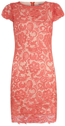 Dorothy Perkins Coral lace overlay dress