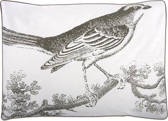 Thomas Paul Ornithology Shams