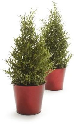 Sur La Table Holiday Rosemary Topiary Cone, Set of 2, 41⁄4""