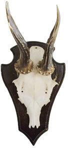 Jayson Home & Garden Vintage Antler Trophy
