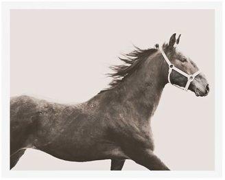 Pottery Barn Vintage Horse Framed Print by Jennifer Meyers