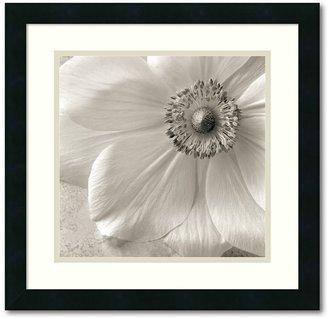 "Amanti art ""Poppy Study II"" Framed Art Print by Sondra Wampler"