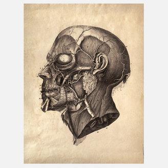 Curious Prints Anatomy Facial Print