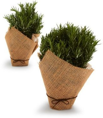 Sur La Table Rosemary Trees in Burlap, Set of 2