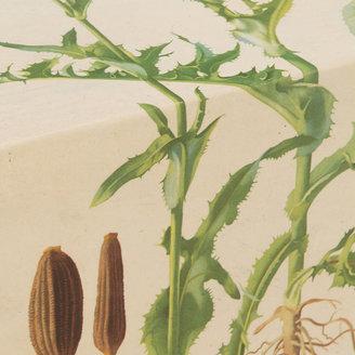 STUDY Botanical Table IV