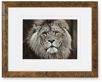 Williams-Sonoma Safari Animals with Burled Wood Frame, Lion