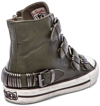 Ash Vodka Sneaker