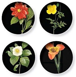 Thomas Paul Florilegium Coaster Dishes Set of 4