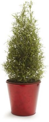 """Sur La Table Holiday Rosemary Topiary Cone, 61⁄2"""""""