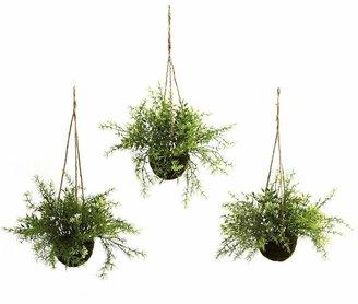 Nearly natural 3-pc. Ruscus, Sedum & Springeri Hanging Plant Basket Set