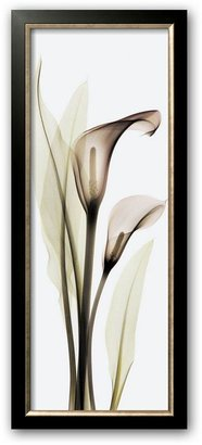 "CALLA Art.com lily"" framed art print by albert koetsier"