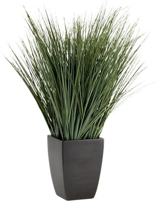 Crate & Barrel Potted Onion Grass