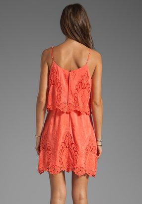 Dolce Vita Jeralyn Petticoat Embroidery Mini Dress
