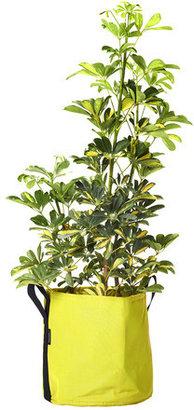 Bacsac Planter 25L Avocado